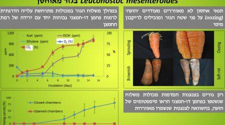 השפעת האווירה הגזית על פתוגניות החיידק Leuconostoc mesenteroides בגזר מאוחסן