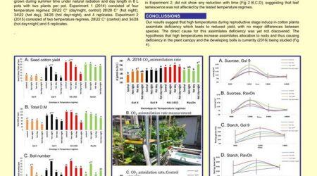How do High Temperatures Impair Cotton (Gossypium Spp.) Productivity